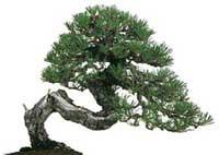 Giardini giapponesi zen progettazione e realizzazione for Laghetto giapponese