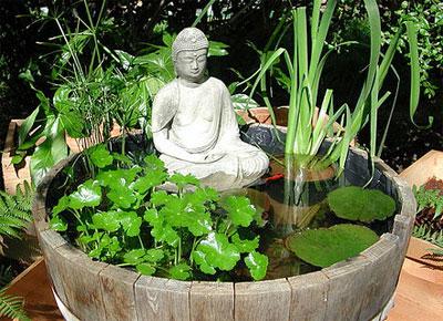 Piante acquatiche quali e come coltivarle nel laghetto for Vasche per laghetti artificiali